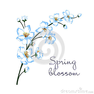 Vector illustration of spring blossom branch Cartoon Illustration