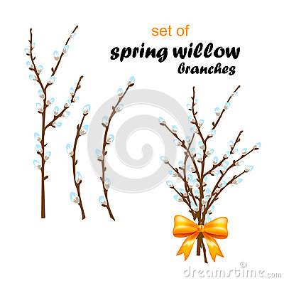 Vector illustration of spring willow on white background Cartoon Illustration