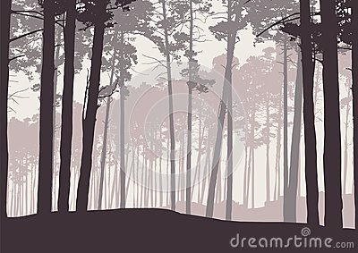 Vector illustration of a winter coniferous forest with pine tree Vector Illustration