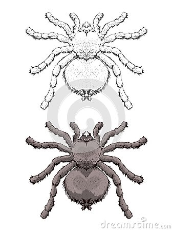Free Vector Illustration With Hand Drawn Spider. Two Variants Of Inse Stock Images - 127778234
