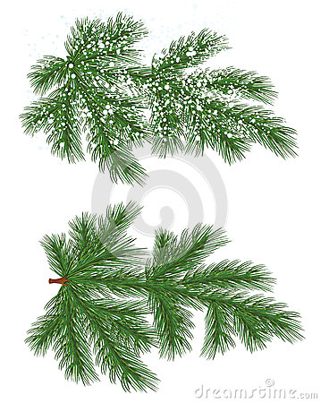 Free Vector Isolated Pine Branch With Snow Stock Photos - 46777183