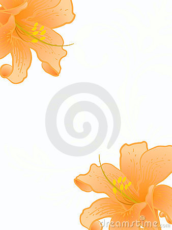 Vector lilies.