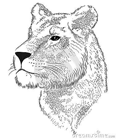 Vector lioness