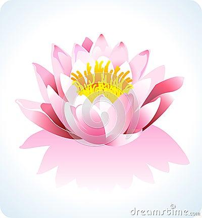 Vector Lotus?>