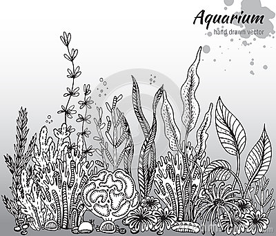 algae illustration vector monochrome hand drawn illustration with aquarium 4397