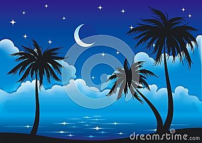 Vector night coast