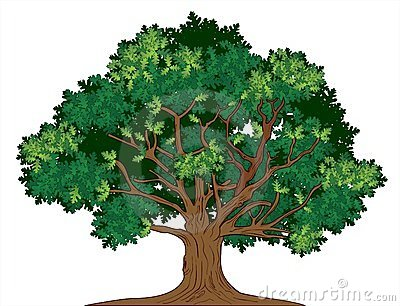 Vector oak tree Vector Illustration
