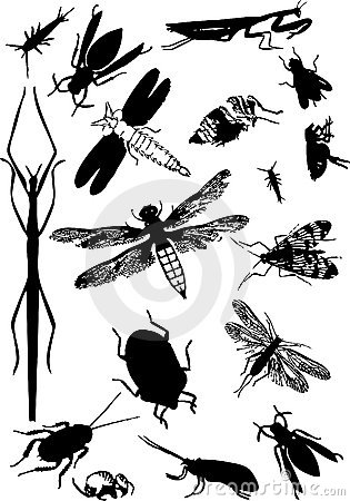 Free Vector Of Insects Royalty Free Stock Photo - 3011265