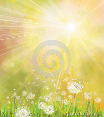 Free Vector Of Spring Background With White Dandelions. Stock Image - 35975701