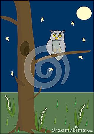 Vector an owl.