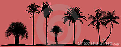 Vector palm trees silhouettes