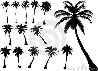 Vector palms and trees