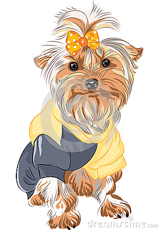 vector Pedigreed dog Yorkshire terrier sitting