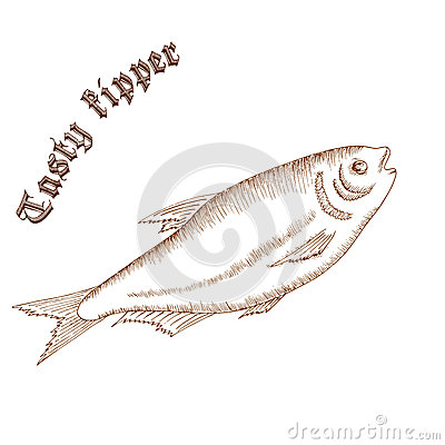 Free Vector Pencil Hand Drawn Illustration Of Fish With Label Royalty Free Stock Images - 62751219