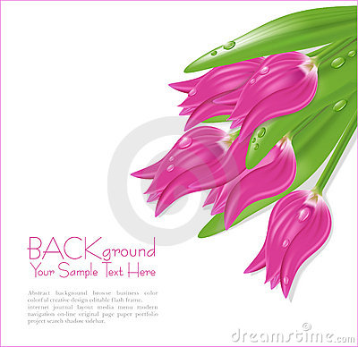 Vector pink tulips with drops of dew