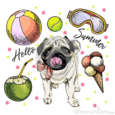 Free Vector Portrait Of Pug Dog. Hello Summer Cartoon Illustration. Coconut Cocktail, Balls, Ice Cream. Hand Drawn Pet Royalty Free Stock Photos - 118558648