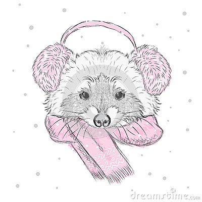 Free Vector Raccoon . Cute Raccoon Vector . Raccoon Painted By Hand. Raccoon In The Winter Scarf And Headphones . Winter Postcard. Prin Royalty Free Stock Images - 63204739