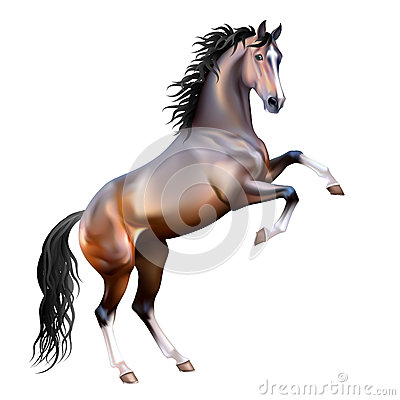 Vector realistic bay horse isolated