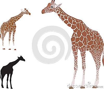Vector realistic giraffe