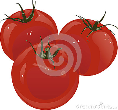 Vector red tomatoes