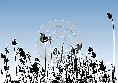 Vector Reeds