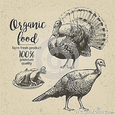 Vector Roasted Turkey Vector Illustration