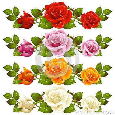 Vector rose horizontal vignette isolated on backgr