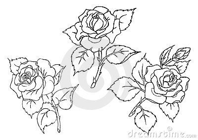 Vector roses. Trace of freehand drawing.