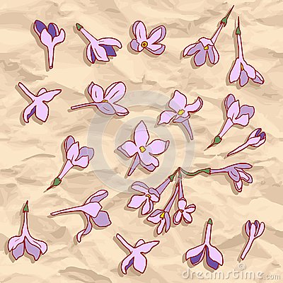 Vector seamless pattern with lilac flowers
