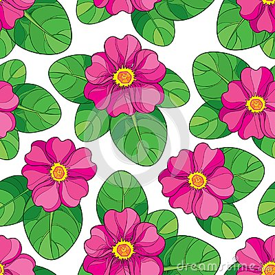Free Vector Seamless Pattern With Outline Pink Primula Or Primrose Flower And Green Leaves On The White Background. Stock Image - 105524561