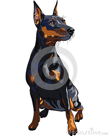 vector Serious dog Miniature Pinscher