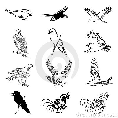 Vector set of 12 bird drawings