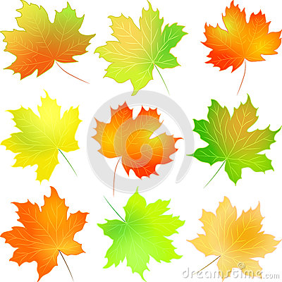 Vector set autumn maple leaf