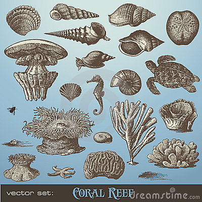 Free Vector Set: Coral Reef Stock Photo - 15401990