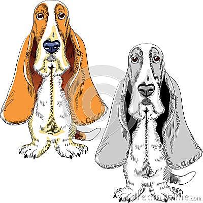 Vector Set dog Basset Hound breed