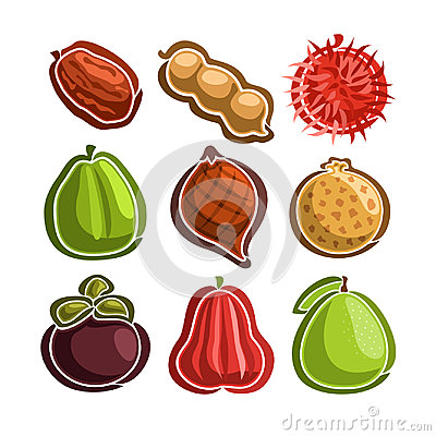 Free Vector Set Icons Of Colorful Exotic Fruits Royalty Free Stock Image - 97898256