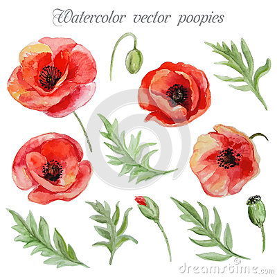 Free Vector Set Of Red Watercolor Poppy Flowers. Royalty Free Stock Photos - 56117648