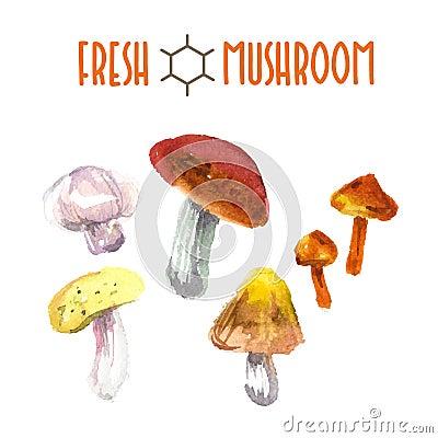Free Vector Set Of Watercolor Mushroom Stock Photos - 64066563