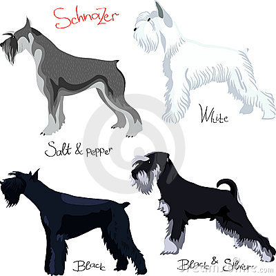 vector Set of Schnauzer