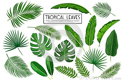 Set tropical leaves Vector Illustration