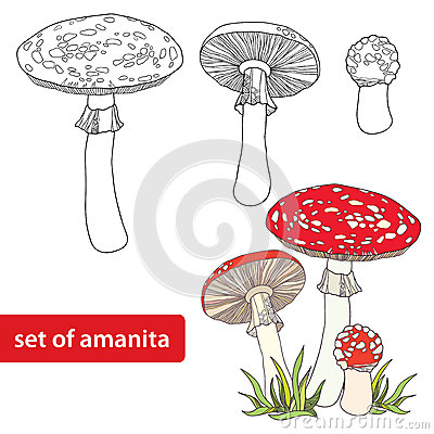 Free Vector Set With Amanita Or Fly Agaric Mushroom Isolated On White Background. Outline Poisonous Red-cup Mushroom In Line Art Decor. Royalty Free Stock Photo - 76619865