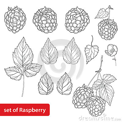 Free Vector Set With Outline Raspberry, Bunch, Berry, Flower And Leaves In Black  On White Background. Fruit Element. Stock Images - 91120914