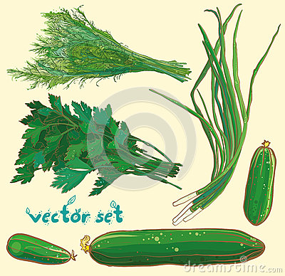 Free Vector Set With Scallions, Dill, Parsley, Cucumbers Royalty Free Stock Photography - 49544597