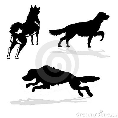 Vector silhouette hunt dogs