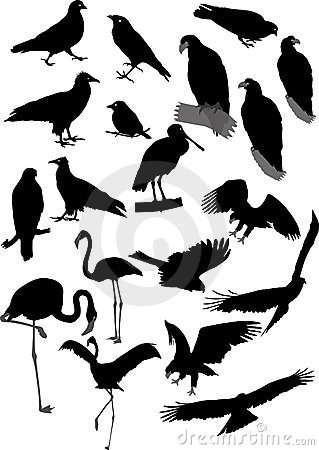 Free Vector Silhouettes Of Birds Stock Photography - 3054382