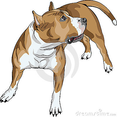 vector Sketch dog American Staffordshire Terrier