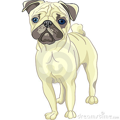 Vector Sketch dog fawn pug breed