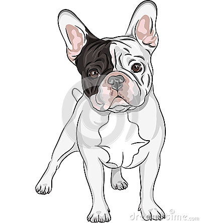 Free Vector Sketch Domestic Dog French Bulldog Breed Royalty Free Stock Image - 30165266