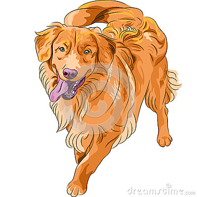 Vector sketch hilarious funny dog breed Nova Scoti