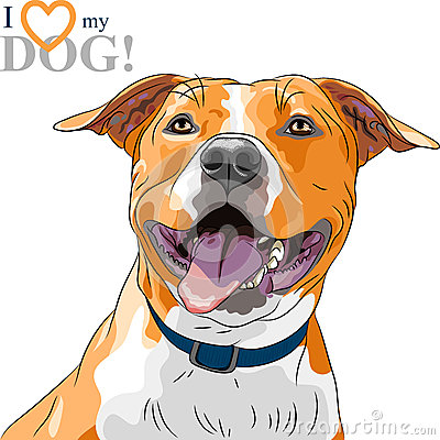 Vector sketch smiling dog American Staffordshire T
